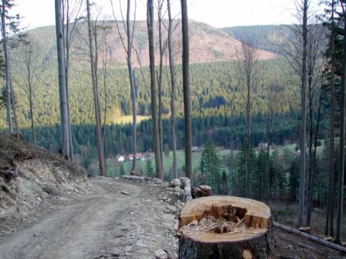 Czarny szlak na Rycerzową – ogołocony z drzew…