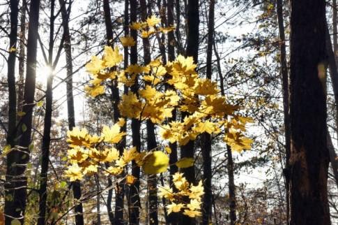 Jesień 2011 – przyroda Krzepic