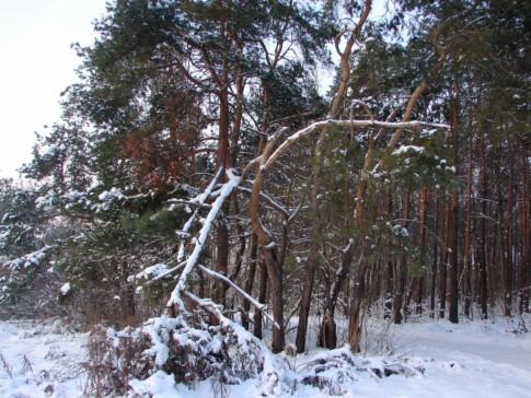 zmarznięte drzewa w lesie przy LO Krzepice